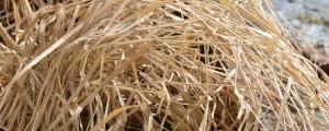 Grasses01